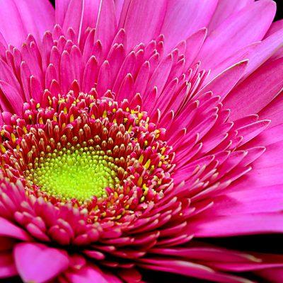 In Bloom 2