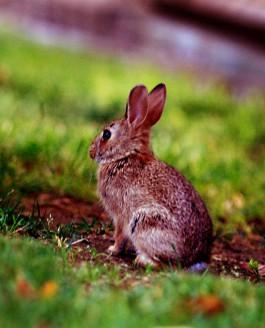 The Noisy Rabbit